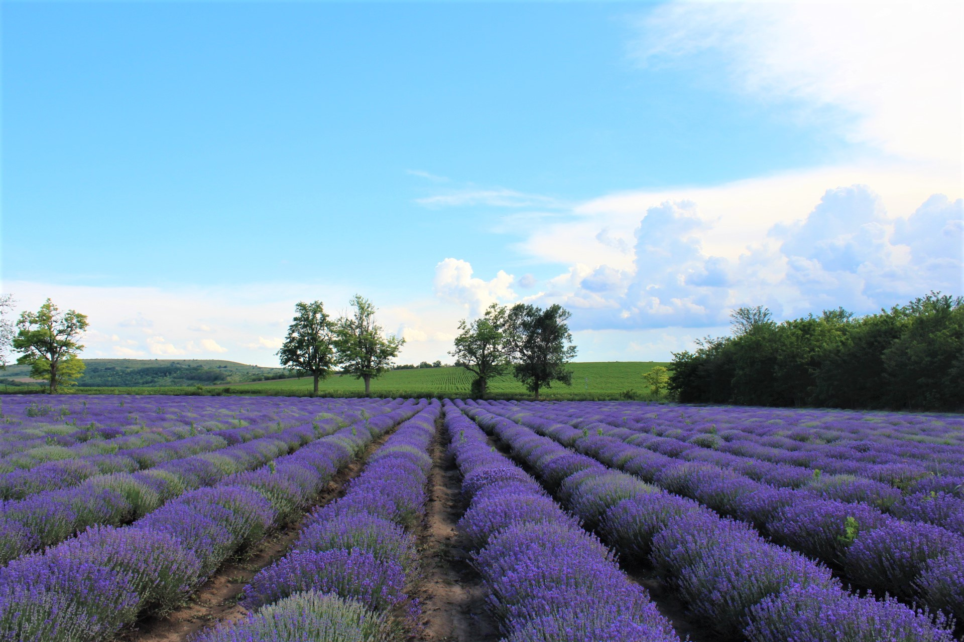 Why Lavender Floral Water is a great Christmas gift